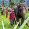 Elephant Hills Camp - Elefanten mit Mahouts